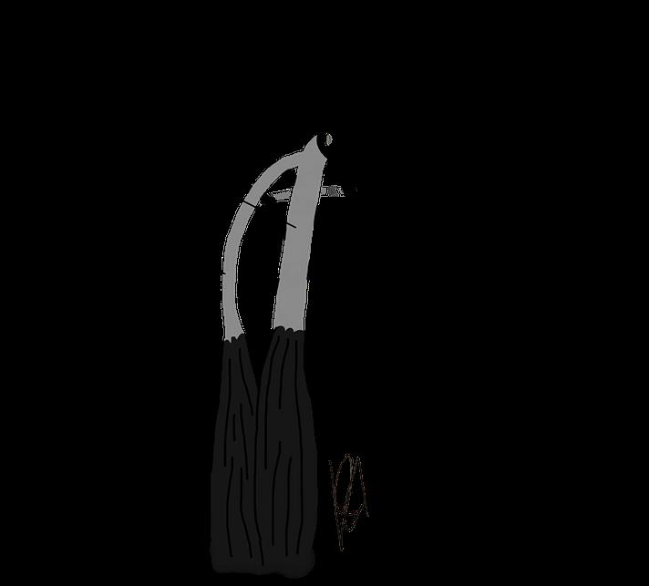 Lange und Kurze Bizepssehne